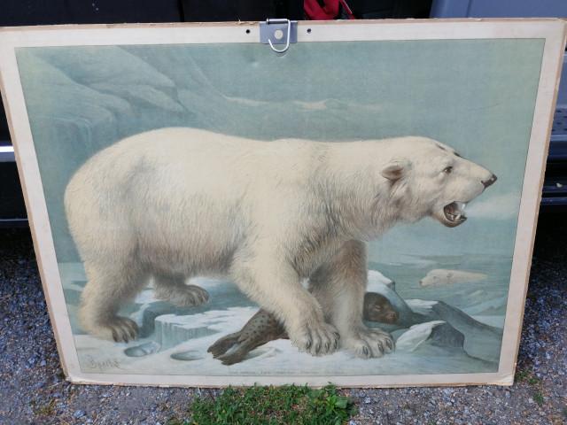 Koulutaulu Jääkarhu